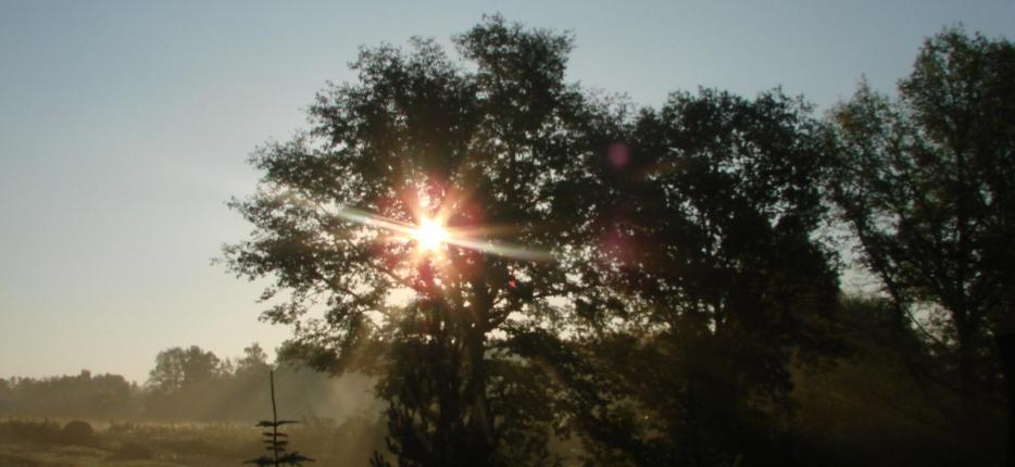 Saulė žemai